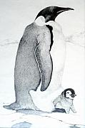 Penguin Drawings - Emperor and Princess by Jill Iversen
