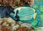 Sea Creatures Posters - Emperor Angelfish  Poster by Arline Wagner
