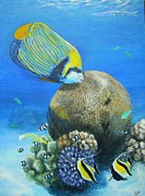 Fish Underwater Paintings - Emperor Angelfish by Jennifer Belote