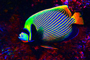 Tropical Fish Digital Art Posters - Emperor Angelfish Poster by Wingsdomain Art and Photography