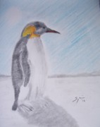 Penguin Drawings - Emperor Penguin by Spencer  Joyner