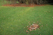 Transient Framed Prints - Empty lawn with a little heap of leaves scraped together Framed Print by Matthias Hauser