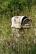Us Mail Prints - Empty Mailbox at 35476 Print by Gwyn Newcombe