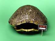 Colored Shell Framed Prints - Empty Turtle Shell With For Sale Sign Framed Print by Jeffrey Hamilton