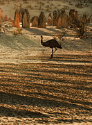 Emu Acrylic Prints - Emu Terrain Acrylic Print by Heather Thorning
