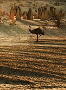 Emu Terrain Print by Heather Thorning