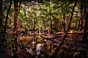 Orton Effect Prints - Enchanted Forest Print by Alex Owen
