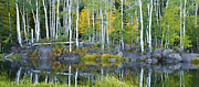 Fishing Creek Drawings Prints - Enchanted Forest Panorama Print by Kate Sumners