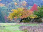Fall Grass Posters - Enchanted Park Poster by Lori Seaman