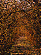 Overhanging Posters - Enchanted Path Poster by Jo-Anne Gazo-McKim