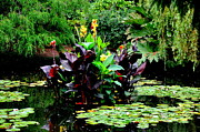 Canna Lilies Photos - Enchanted Pond by Tanya  Searcy