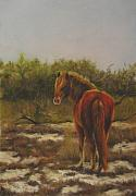 Horse Pastels Originals - Encounter in the Dunes by Sabina Haas