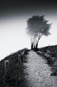 Black N White Art - End of a road by Laszlo Rekasi