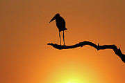 Vulture Photos - End-of-day by Suebg1 Photography