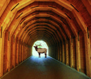 Elk Mixed Media - End of the Tunnel - Digital Work by Photography Moments - Sandi