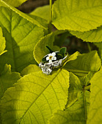 Engagement Photo Metal Prints - Engagement Ring and Flower 1 Metal Print by Douglas Barnett