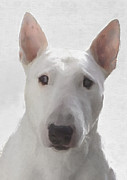 English Bull Terrier Posters - English Bull Terrier Poster by Gael Keevil