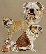 Sporting Group Framed Prints - English Bulldog Framed Print by Barbara Keith
