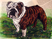 Brindle Prints - English Bulldog Brindle Full body Print by Christas Designs