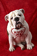 Hug Posters - English Bulldog Poster by Garry Gay