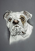 Pair Pastels Framed Prints - English Bulldog Framed Print by Patricia Ivy