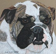 Anita Putman - English Bulldog Vignette