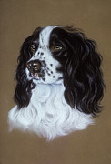Life-like Pastels Posters - English Cocker Spaniel Poster by Patricia Ivy
