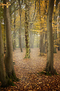 English Forest In Autumn Print by Ethiriel  Photography