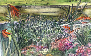 Pen Drawings Originals - English Garden by Mindy Newman