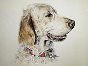 Artwork Drawings Framed Prints - English Setter Framed Print by Keran Sunaski Gilmore