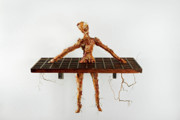 Bark Sculptures - Engrained by Sharon Sychta
