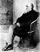 Darwin Photos - Engraving Of Charles Darwin In 1874, Aged 65 by