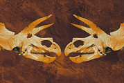 Triceratops Framed Prints - Enhanced Image Of Triceratops Dinosaur Skulls Framed Print by Mehau Kulyk