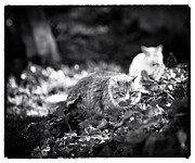 Cats Photo Prints - Enjoy the Little Things Print by John Rizzuto