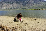 Dog Beach Card Framed Prints - Enjoying a lake day Framed Print by John  Greaves