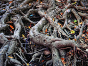 Tree Roots Photo Metal Prints - Entanglement Metal Print by Donna Blackhall