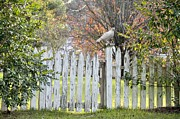 Picket Fences Posters - Enter In Peace Poster by Jan Amiss Photography