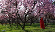 Fantasy Photos - Enter Spring by Alana  Schmitt