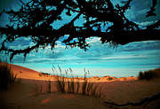 Coos Framed Prints - Enter the Dunes Framed Print by Dale Stillman