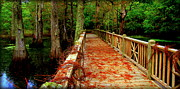 Pathways Photos - Entering Autumn by Karen Wiles