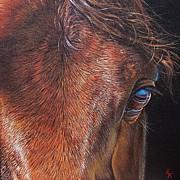 Equine 2 Print by Elena Kolotusha