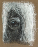 Original  Pastels - Equine Eye Detail by Terry Kirkland Cook