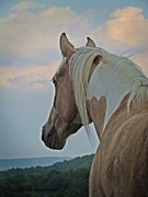  Paint Horse Posters - Equine Study - Paint Horse Poster by Laurinda Bowling