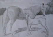 Army Drawings Originals - Equus Caballus by SAIGON De Manila