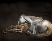 Mare Photo Originals - Equus One by Susan Williams