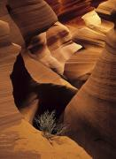 Navajo Lands Posters - Eroded Sandstone And A Tumbleweed Poster by Ralph Lee Hopkins