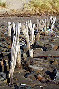 Longshore Drift Prints - Eroded Wooden Fence Print by Dr Keith Wheeler