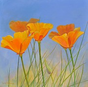 California Poppy Paintings - Escholtzia de Crafton by Muriel Dolemieux