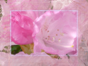 Stamen Digital Art Framed Prints - Essence of Pink Framed Print by Lori Seaman