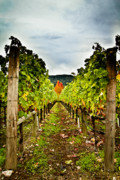 Napa Valley Vineyard Prints - Estate 2 Print by Ryan Hartson-Weddle